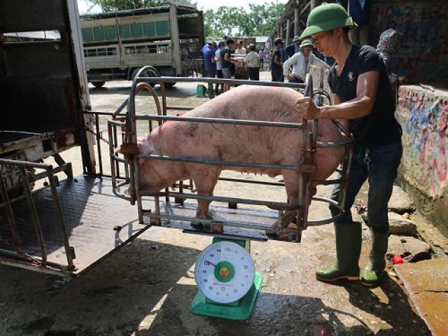 Lợn Thái Lan đổ bộ, giá lợn hơi bất ngờ giảm: Bà nội trợ chớ vội mừng!