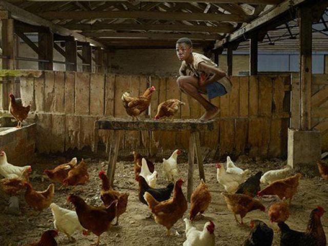 Cậu bé bị nhốt sống chung với gà suốt 22 năm và hành trình hoà nhập lại với con người