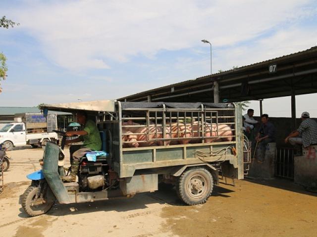"""Giá lợn hơi có giảm khi lợn Thái Lan chính thức """"đổ bộ"""" thị trường Việt?"""