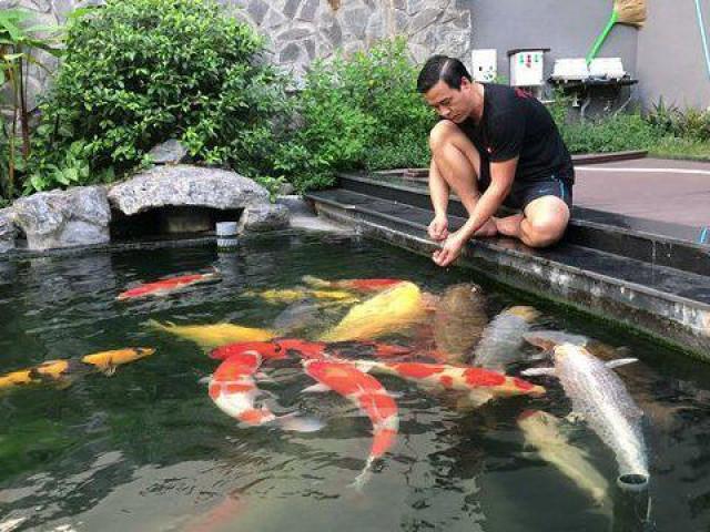 """Đại gia kín tiếng Sài thành sở hữu đàn cá Koi """"vạm vỡ, độc nhất vô nhị"""", có con giá nửa tỷ"""