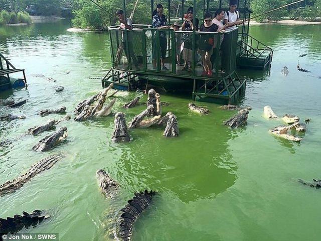 Rợn người du khách TQ dùng bè tạm bợ cho bầy cá sấu ăn