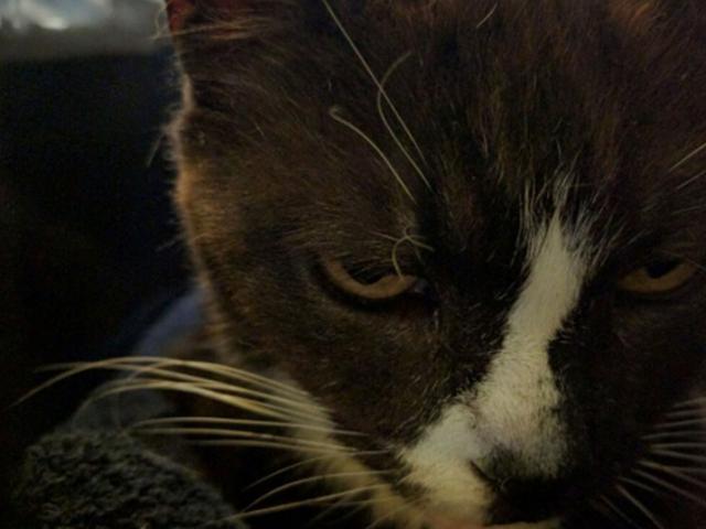Chú mèo mất tích ở London, phiêu bạt qua biển đến Paris