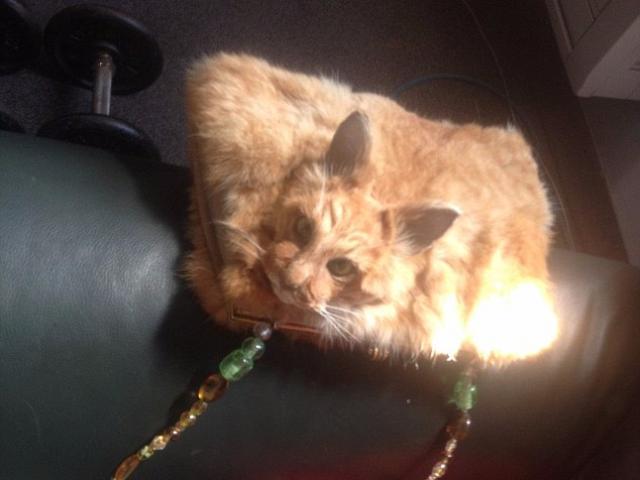 Túi xách bệnh hoạn làm từ... nguyên con mèo chết rao bán 30 triệu đồng