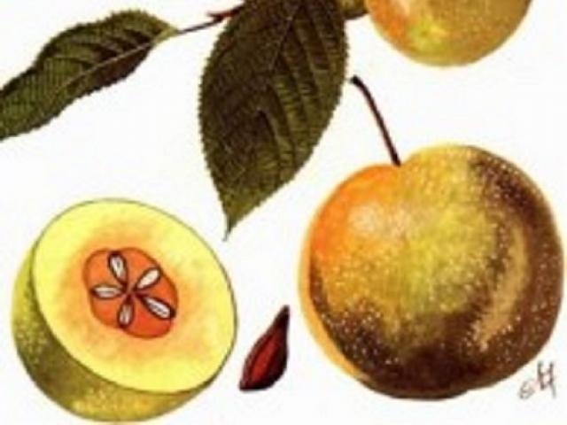 7 bài thuốc trị tiêu chảy do ăn uống