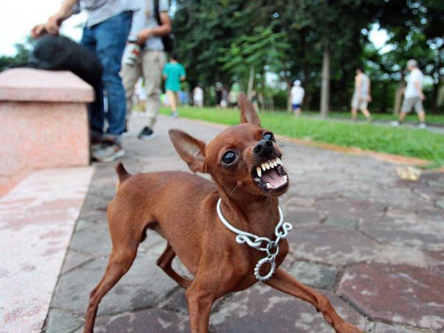 Thương tâm bé 6 tuổi tử vong vì bị chó cắn lại đi khám thầy lang