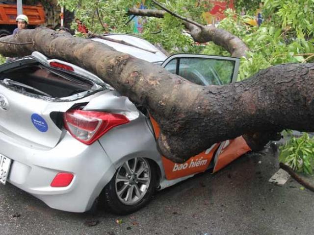 """""""Cụ"""" cây đè bẹp ô tô giữa trung tâm Sài Gòn, cô gái nguy kịch"""
