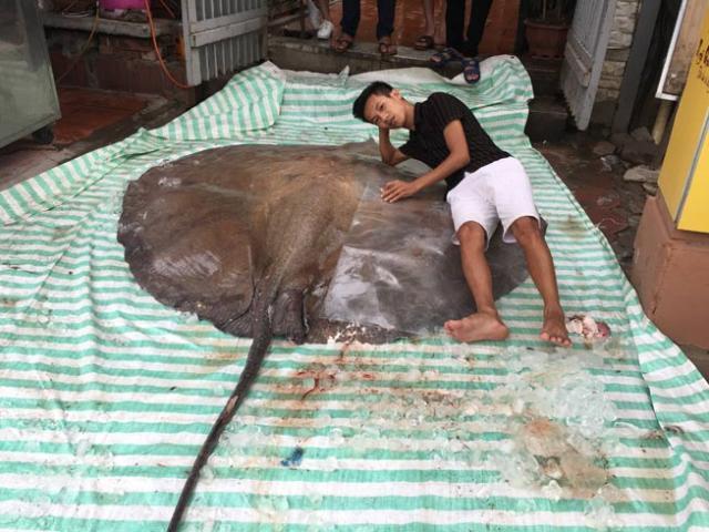 """""""Thủy quái"""" nặng hơn 2 tạ, đuôi dài 1,5m xuất hiện ở Hà Nội"""
