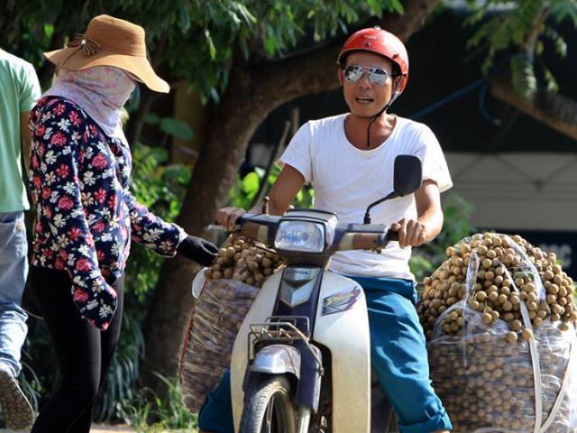Thực hư nhãn lồng Hưng Yên giá 6.000-8.000 đồng/kg