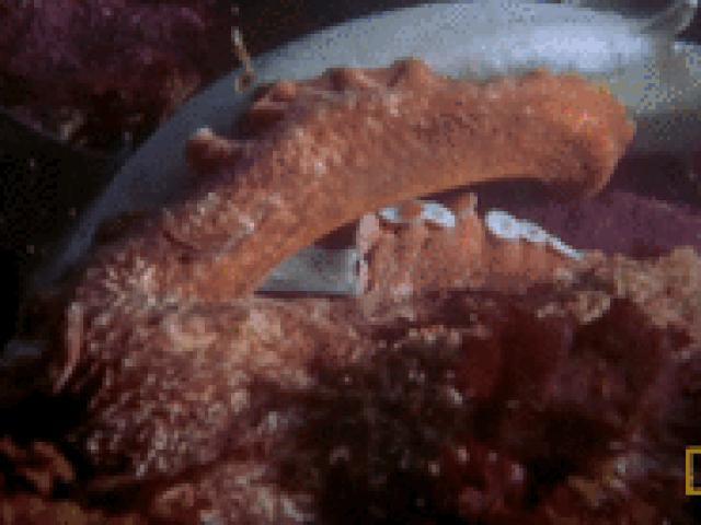 Kinh ngạc bạch tuộc khổng lồ dùng xúc tu giết chết cá mập