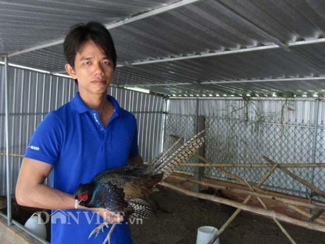 Kỹ sư điện tử bỏ về quê nuôi chim, gà độc, lạ, thu hàng trăm triệu/năm