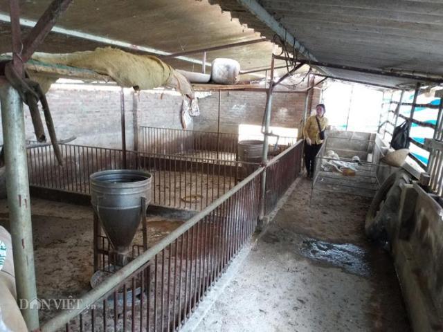 Hà Nội chi hơn 1.000 tỷ đồng hỗ trợ bệnh dịch tả lợn châu Phi