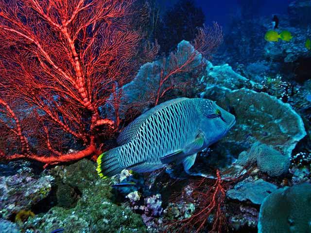 Quá cuồng ăn, người TQ khiến loài cá có vẻ ngoài rực rỡ này sắp tuyệt chủng