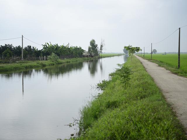 """Kỳ lạ ngôi làng ở ven sông, cứ đào xuống đất là gặp """"quan tài"""" cây khổng lồ"""