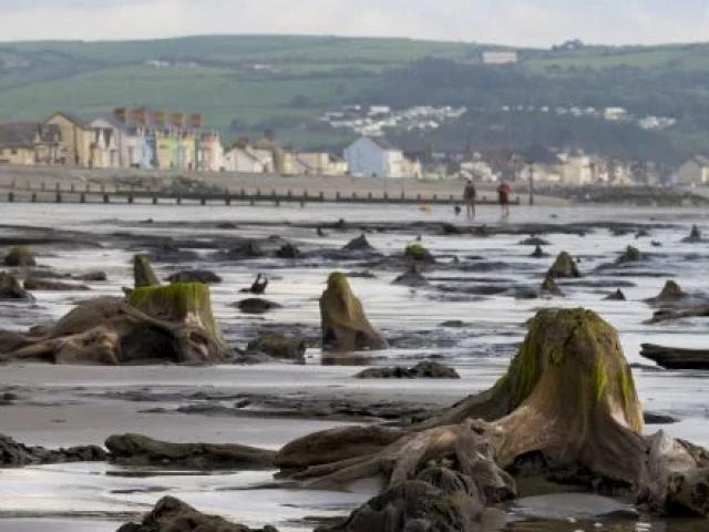 Cơn bão lật tung khu rừng bí ẩn chôn vùi dưới than bùn và cát suốt 4.500 năm