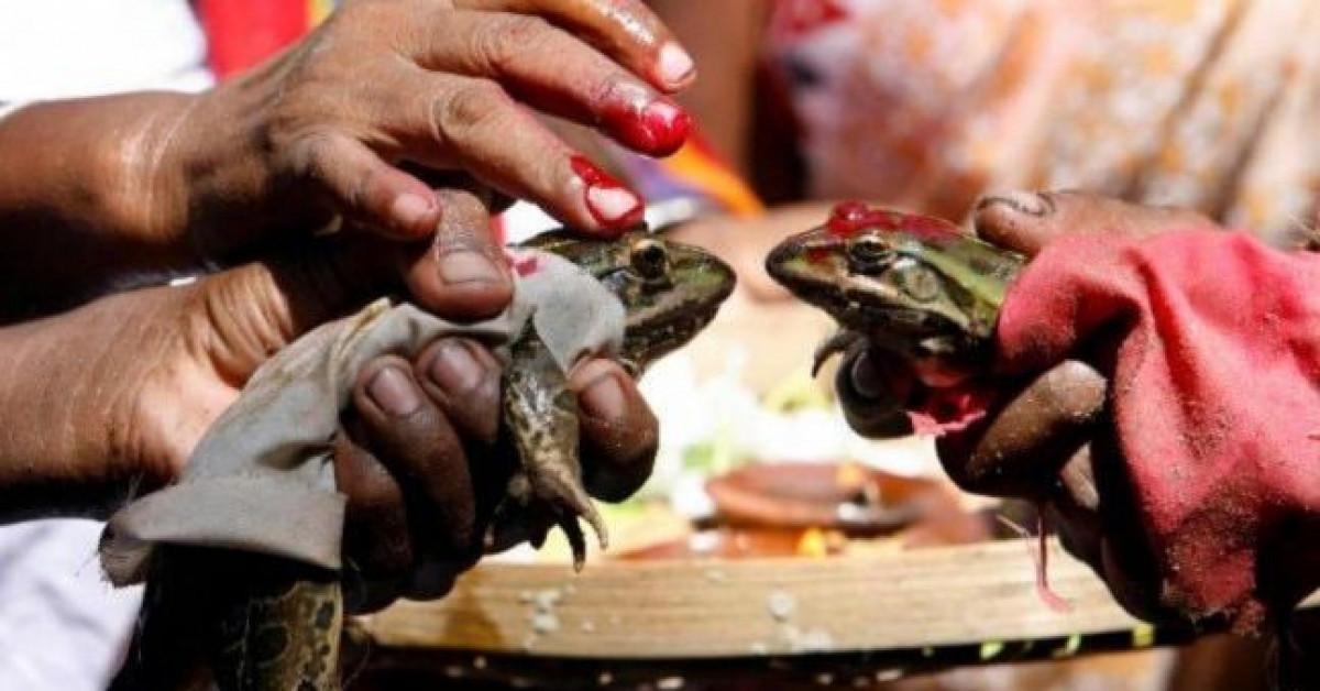 Cặp cóc 'kết hôn' để cầu mưa, hai tháng sau bị ép 'li hôn' vì mưa quá nhiều