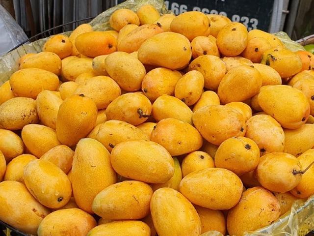 Xoài mini hạt lép bán tràn lan ở chợ: Mập mờ nguồn gốc chị em vẫn mua tới tấp