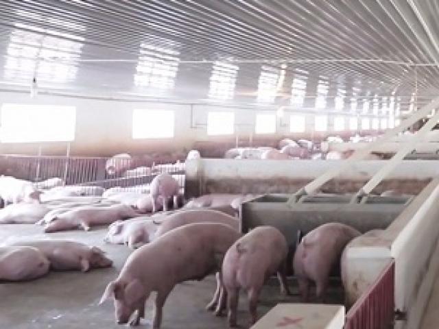 Đại gia bán thịt lợn công bố mức lãi kỷ lục sau 24 năm đi vào hoạt động