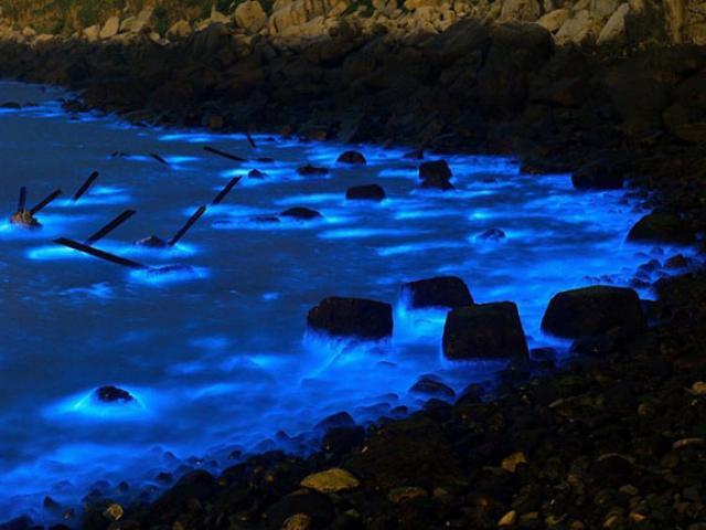 Kỳ lạ vùng biển có cá heo phát sáng như đèn huỳnh quang