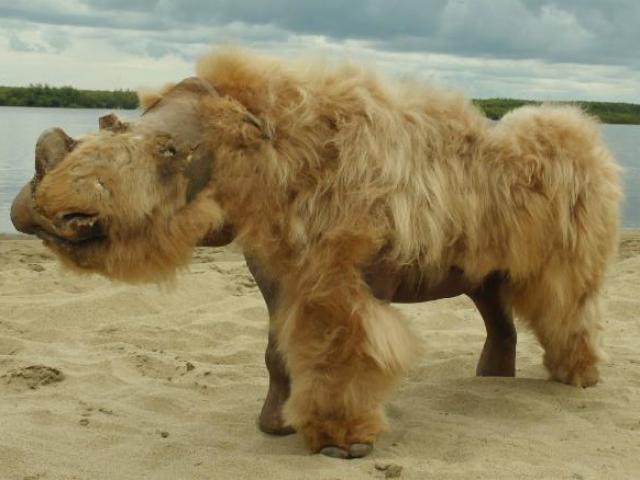 Nga: Sinh vật 14.000 năm vẫn nguyên vẹn như lúc sống, phát hiện bất ngờ trong ruột