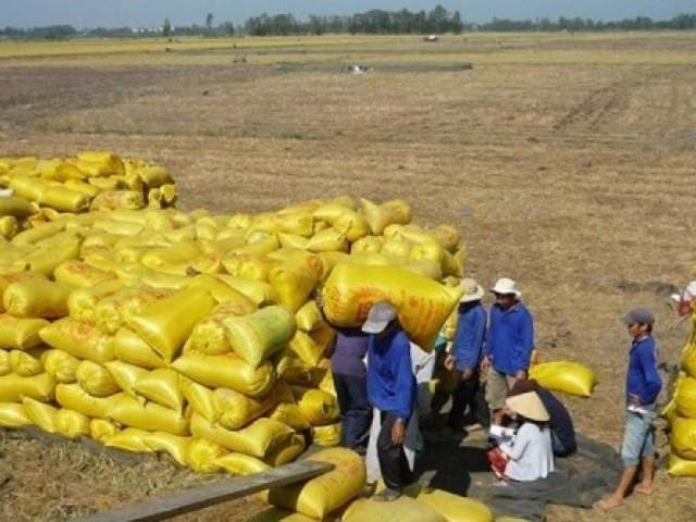 Giá gạo xuất khẩu của Việt Nam tăng kỷ lục trong 2 năm qua
