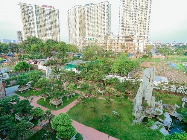 Cận cảnh khu vườn tiền tỷ của tay chơi cây cảnh nức tiếng Hà thành
