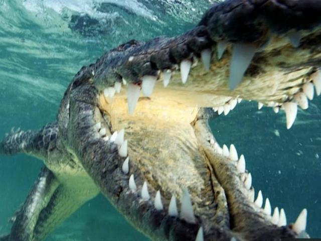 Thuyền ngư dân đua tốc độ với... cá sấu khổng lồ