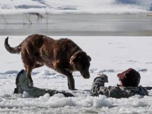 Cảm động với 10 câu chuyện về chú chó trung thành