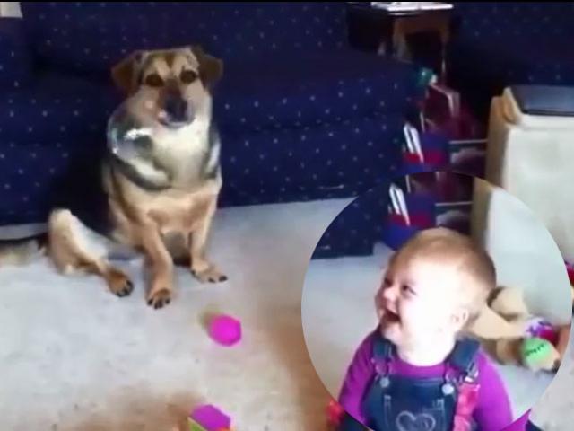 """Clip: Bé cười sung sướng khi chó """"ăn"""" bóng nước"""