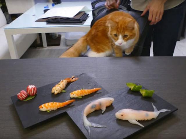 Cách làm Sushi hình con cá đánh lừa được cả mèo