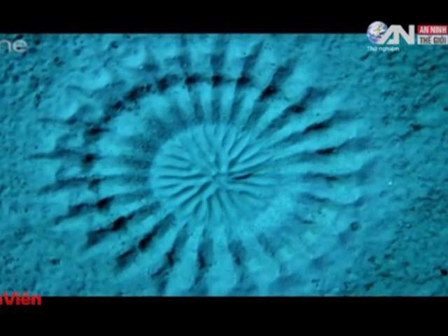 Kinh ngạc xem cá vẽ tranh dưới đáy đại dương