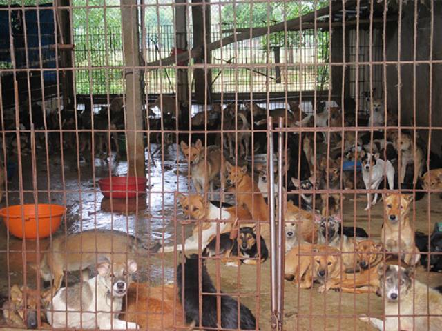 Người Việt ăn thịt chó nhiều thứ 2 thế giới