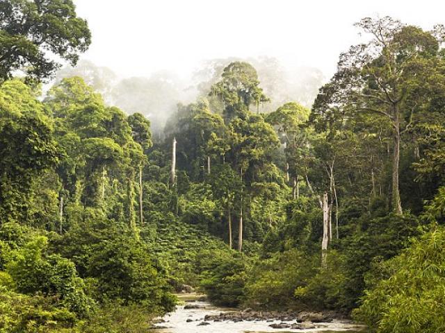 Indonesia: Sống sót trong rừng 2 tuần sau tai nạn máy bay