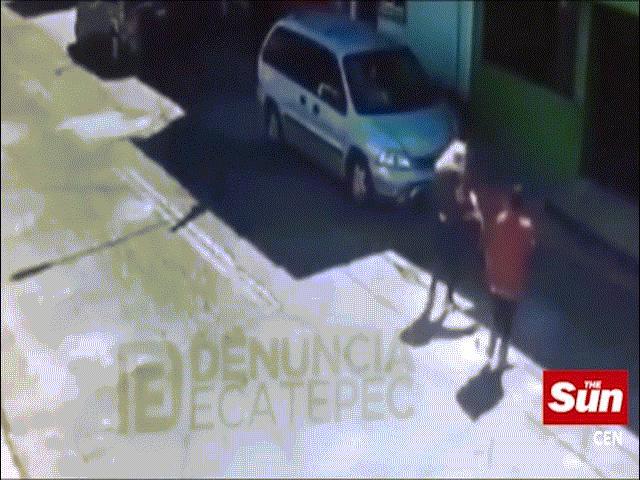 Chó pit bull tự dưng cắn người giữa phố, bị đánh đập cũng không nhả