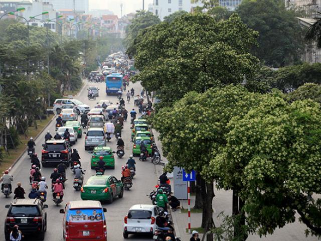Sống giữa khu phố nồng nàn mùi hoa sữa, người Hà Nội yêu hay ghét?