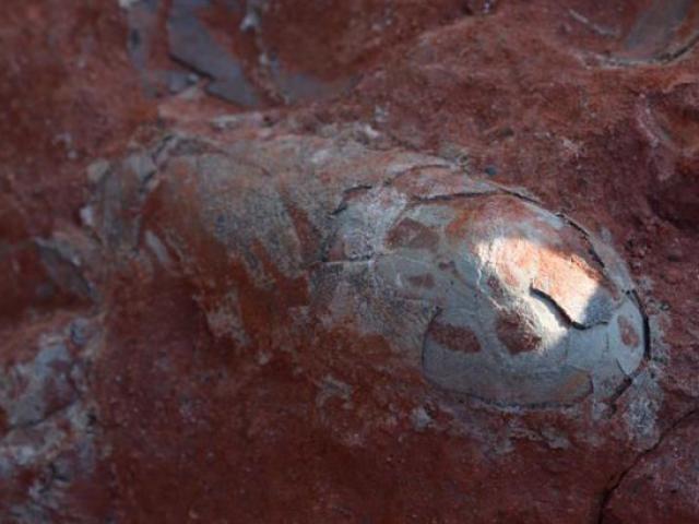 Phát hiện ổ 20 trứng khủng long 130 triệu năm nguyên vẹn ở TQ