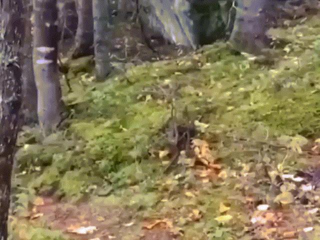 """Sự thật đằng sau hiện tượng khu rừng già """"thở phì phò"""" như sinh vật sống"""