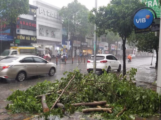 Cây bật gốc trong mưa bão, nữ nhân viên ngân hàng cùng con nhỏ suýt chết