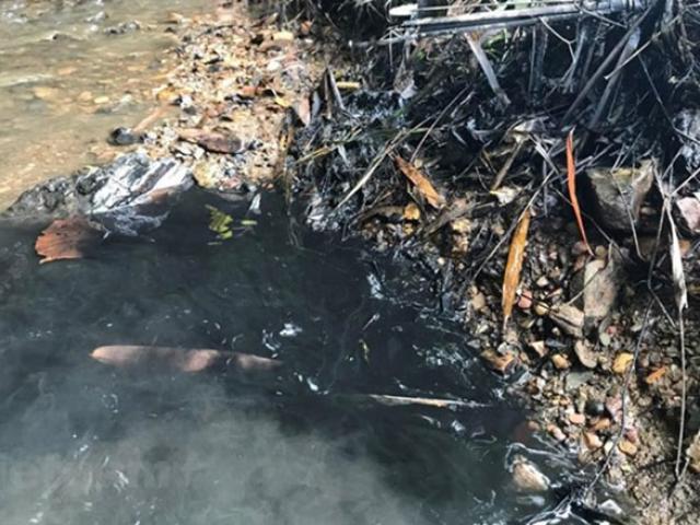 Tiến sĩ sức khỏe môi trường: Con đường phơi nhiễm styren và cách đào thải ra ngoài cơ thể