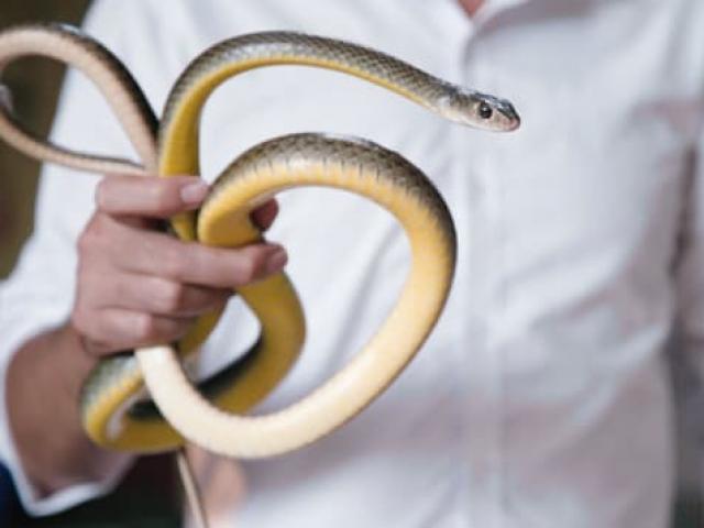 Báo tây gợi ý đặc sản tại làng rắn nổi tiếng nhất Hà Nội