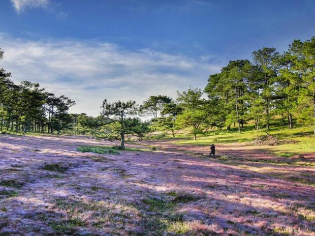 Săn ảnh mùa cỏ hồng Lang Biang – Đà Lạt