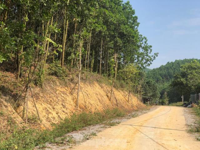 """Kỳ lạ, hàng cây tiền tỷ """"tự mọc"""" trong khuôn viên dự án ở Quảng Ninh"""