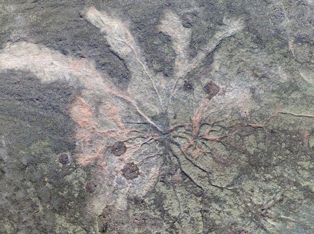 """Hóa thạch """"rừng ma"""" cổ quái nhất thế giới lộ diện ở New York"""