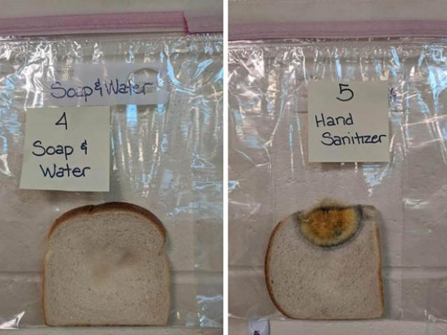 Chỉ bằng vài lát bánh mì có thể nhận ra tác dụng của việc rửa tay hơn hẳn thuốc khử trùng