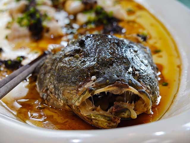 Loài cá hung dữ nhất Trung Quốc, nhìn hàm răng đã thấy sợ không dám ăn