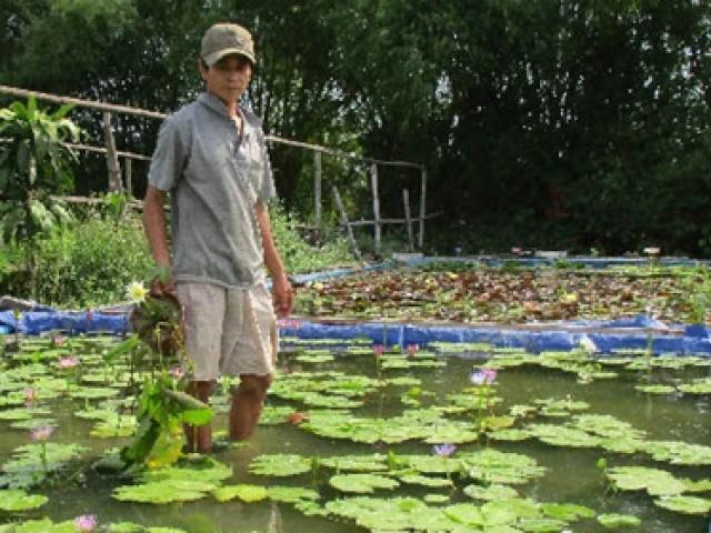 """Lấy thứ trôi nổi khắp ao ở Việt Nam trồng, """"mở mắt"""" là có tiền kiếm trăm triệu"""