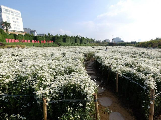Giới trẻ nô nức check in ở thung lũng hoa lớn nhất Hà Nội