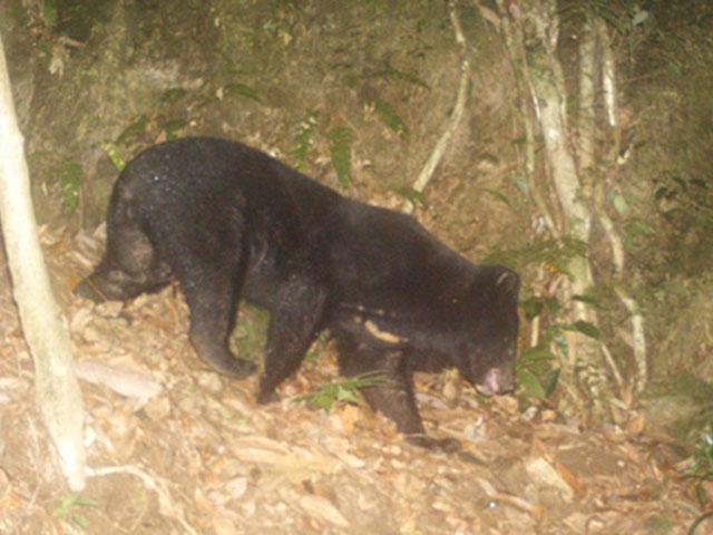 Một người dân ở Quảng Nam bị gấu rừng tấn công kinh hoàng