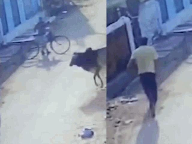 """Sốc cảnh người đàn ông bị """"bò điên"""" tấn công kinh hoàng trên phố"""