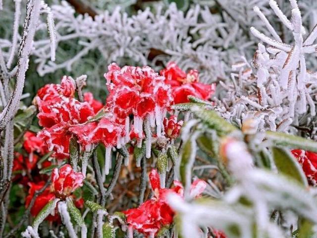 Liệu tuyết có rơi trong đợt rét đậm, rét hại đầu tiên của mùa đông 2020?