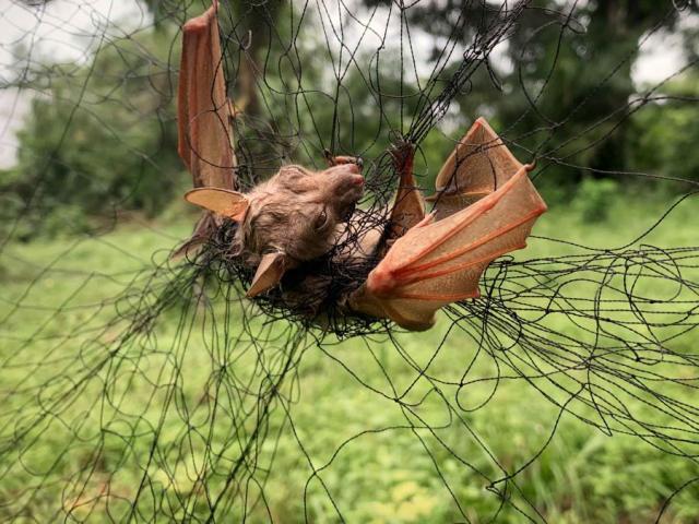 Cảnh báo bệnh dịch nguy hiểm hơn Covid-19 đang ẩn trong rừng Congo